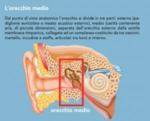 L'orecchio medio